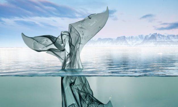 Oportunidad de inversión en empresas vinculadas al reciclaje – Día de los Océanos
